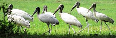 Photograph - Seven Storks by Joshua Bales