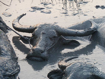 Several Water Buffalos Wallowing In A Mud Hole In Asia - Closer Art Print by Jason Rosette