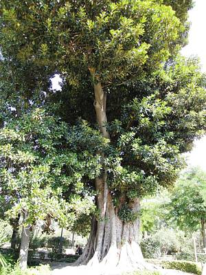 Photograph - Seville Ancient Garden Tree II Spain by John Shiron