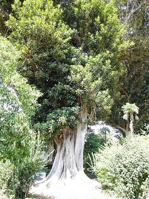 Photograph - Seville Ancient Garden Tree Spain by John Shiron