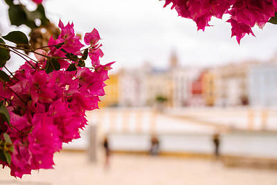 Photograph - Seville - Flowers And Calle Betis by Andrea Mazzocchetti