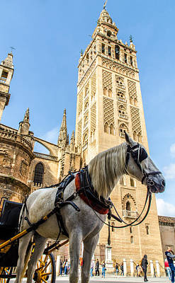 Seville - The Giralda And A White Horse Art Print by Andrea Mazzocchetti