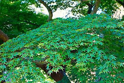 Photograph - Sf Japanese Tea Garden Study 15 by Robert Meyers-Lussier