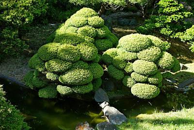 Photograph - Sf Japanese Tea Garden Study 6 by Robert Meyers-Lussier