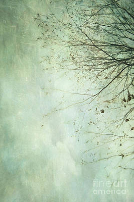 Photograph - Limbs Of A Tree 2 by Priska Wettstein