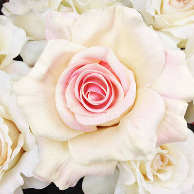 Cottage Floral Photograph - Shabby Chic Romantic White Pink Rose - Pastel Shabby Chic White Roses  by Kathy Fornal