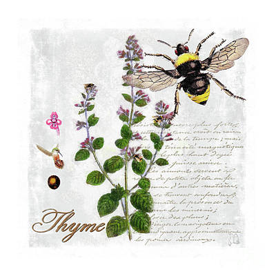 Shabby Chic Thyme Herb Bumble Bee Botanical Illustration Art Print