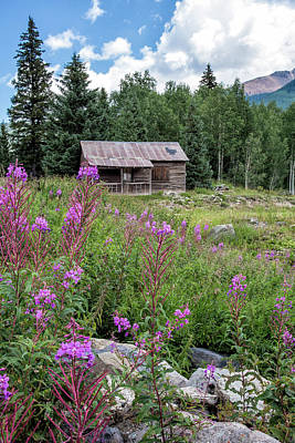 Shack With Fireweed Art Print