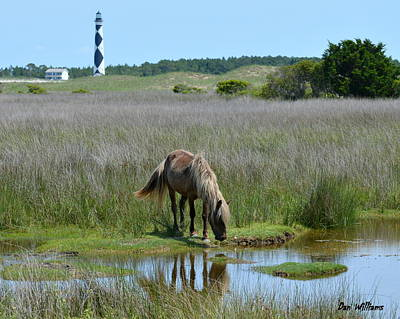 Photograph - Shackleford Pony by Dan Williams