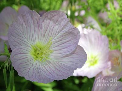 Photograph - Shade Loving Blooms Glow by Rebecca Overton
