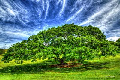Photograph - Shade Master Monkeypod Tree Tripler Army Medical Center Oahu Hawaii Art by Reid Callaway