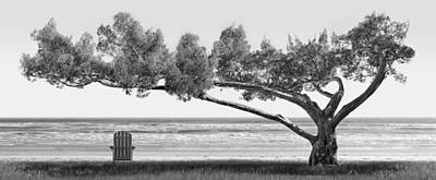 Panoramic Digital Art - Shade Tree Bw by Mike McGlothlen