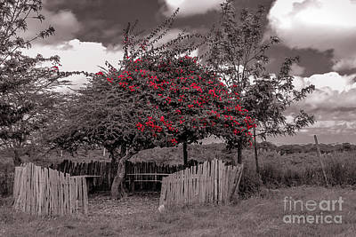 Photograph - Shaded Fenced Area In Kenya by Claudia M Photography