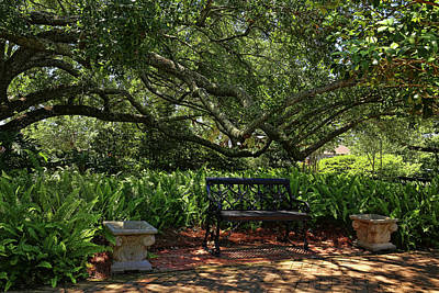 Photograph - Shaded Garden by Judy Vincent