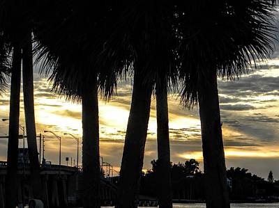 Bridge Photograph - Shaded Palms by Ric Schafer