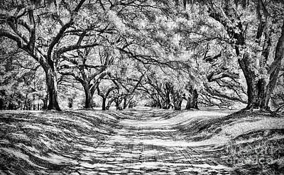 Photograph - Shaded Passage Bw by Dan Carmichael