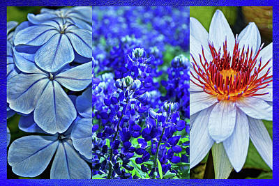 Photograph - Shades Of Blue by Judy Vincent