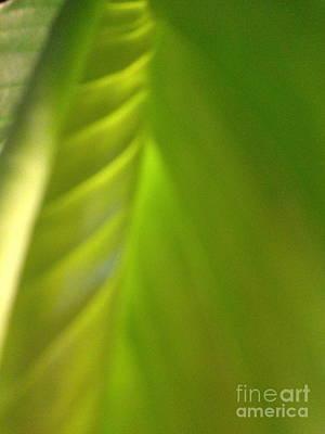 Photograph - Shades Of Green by Barbara Plattenburg
