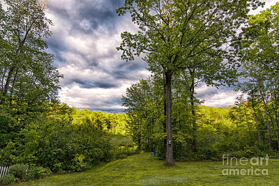 Photograph - Shades Of Green by Mim White