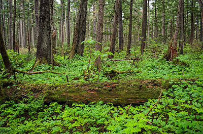Photograph - Shades Of Green - Rainforest Trail - Juneau Alaska by Cathy Mahnke
