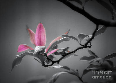 Photograph - Shades Of Grey And Pink by Janice Rae Pariza