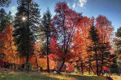 Photograph - Shades Of October  by Saija Lehtonen