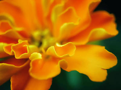 Photograph - Shades Of Orange by Eduard Moldoveanu