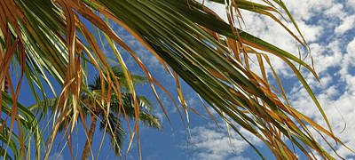 Photograph - Shades Of Palm by Jamart Photography