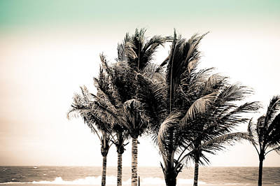 Photograph - Shades Of Palms - Aqua Brown by Colleen Kammerer