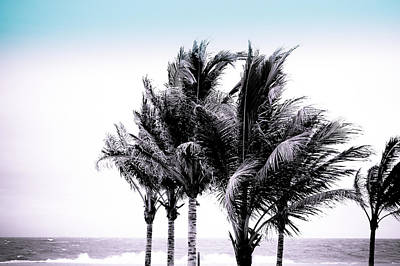 Photograph - Shades Of Palms - Cool Blue Purple by Colleen Kammerer