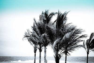 Photograph - Shades Of Palms - Silver Blue by Colleen Kammerer