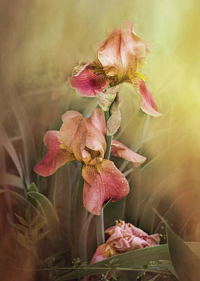 Photograph - Shades Of Pink Iris by TnBackroadsPhotos