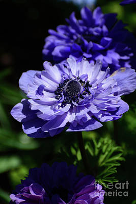 Photograph - Shades Of Purple by Cindy Manero