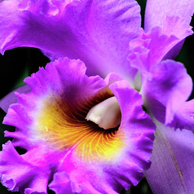 Photograph - Shades Of Purple by Stewart Helberg