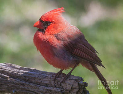 Photograph - Shades Of Red by David Cutts
