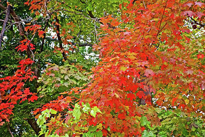 Photograph - Shades Of Red On Trail To North Beach Park In Ottawa County, Michigan by Ruth Hager