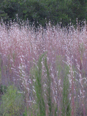 Photograph - Shades Of Summer Grass by Brenda Berdnik