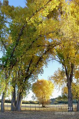 Photograph - Shades Of The Cottonwood by Suzanne Oesterling