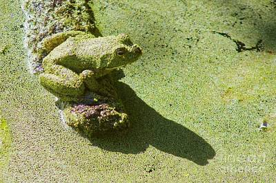 Photograph - Shadow And Frog by Sean Griffin