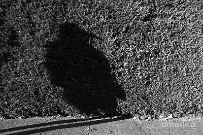 Photograph - Shadow Bird by Jim Corwin