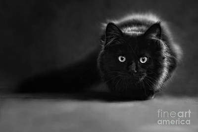 Photograph - Shadow Cat 2 by Jesse Watrous