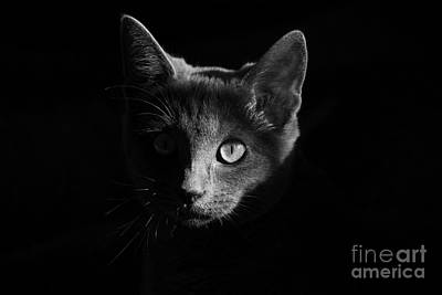 Photograph - Shadow Cat by Jesse Watrous