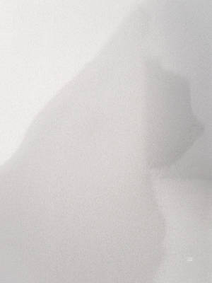 Photograph - Shadow Cat by Menega Sabidussi