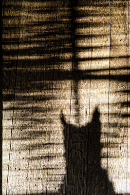 Photograph - Shadow Cat by Sharon Popek