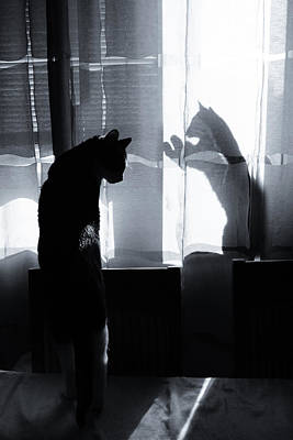 Domestic Animals Photograph - Shadow Cats by Cambion Art