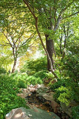 Photograph - Shadow Creek. Japanese Garden by Jenny Rainbow