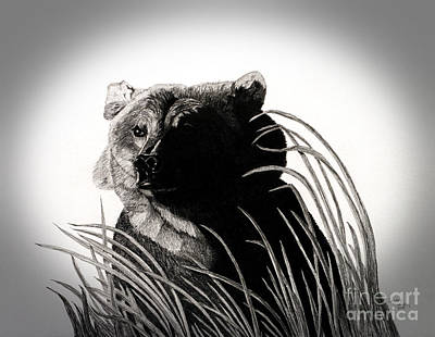 Ursus Drawing - Shadow Face by Shawnay Hansen