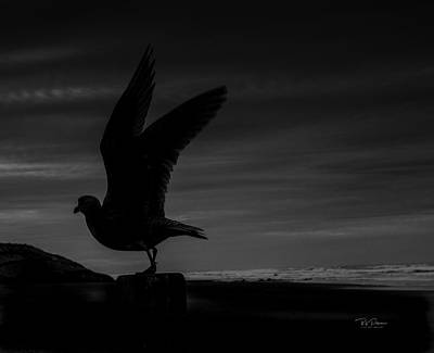 Photograph - Shadow Gull by Bill Posner