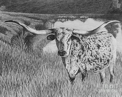 Longhorn Drawing - Shadow Jubilee by Chad Keith