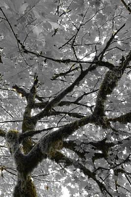 Woods Photograph - Shadow Moss by Charlaina Swinney